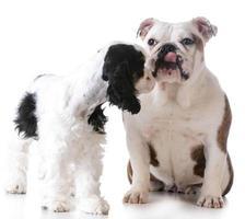 puppy love photo