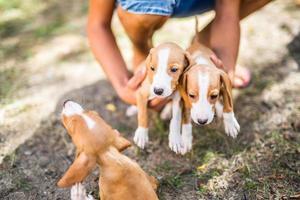 Dog puppies