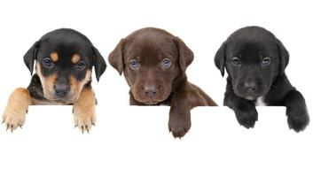 banner de cachorros foto