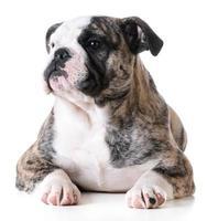 cute puppy photo