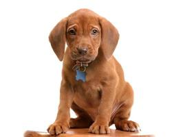Wrigley the Puppy