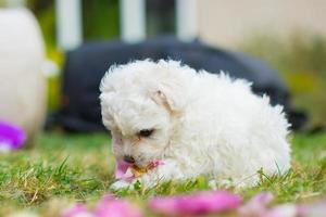 Puppy Eating Flower photo