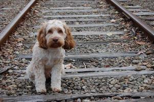 mirada de cachorro callejero