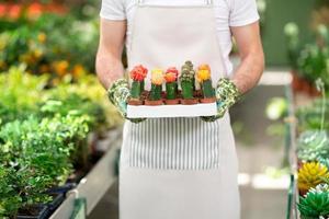 botánico sosteniendo cactus con flores.