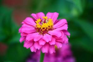 flor en la primavera
