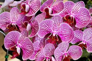 hermosa orquídea púrpura