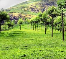 carril de árbol verde india