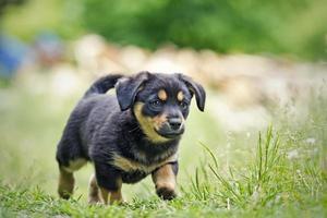 pequeño cachorro foto