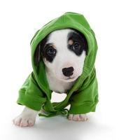 puppy T-shirt photo