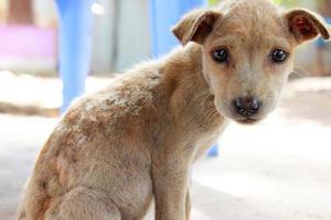 perro callejero en phu quoc foto