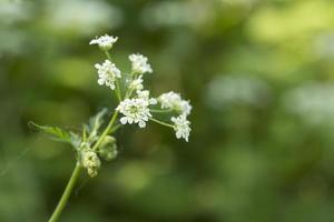 flower in lush environment