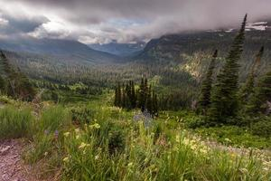 Beautiful landscape and wide flower in Glacier national park