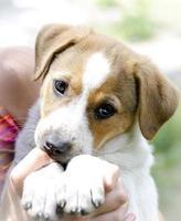 Pelirroja cachorro sin hogar en sus brazos foto