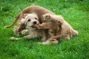 Puppy Fight Best Friends photo