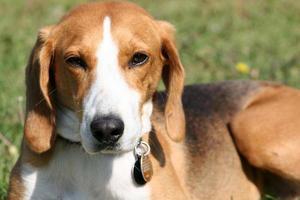 Adult Dog - Survivor photo