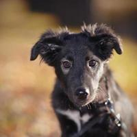 Portrait of a black not purebred puppy