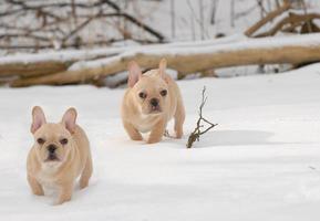 perros en el invierno foto