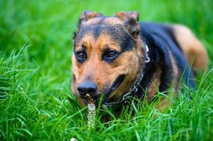 Funny dog on green grass