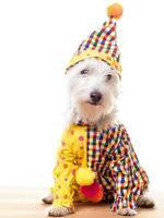 Circus Clown Dog