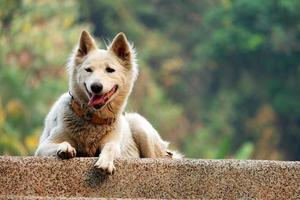 Fluffy White Dog photo