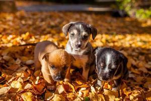 cachorrinhos lindos nas folhas