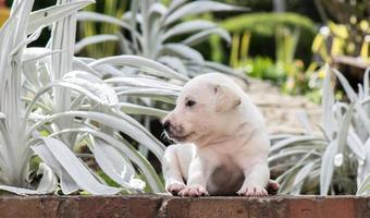 cachorrinho doce no jardim