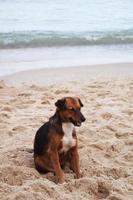 dog sits wait owner on beach photo