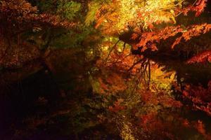 follaje de otoño en el jardín rikugien, komagome, tokio