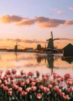 moinhos de vento holandeses com tulipas vermelhas fecham amsterdam, holanda