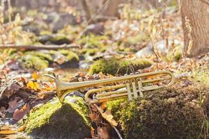Trumpet Stream Wilderness