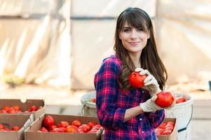 mujer joven seleccionando tomates