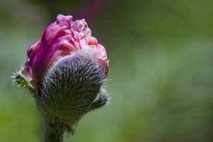 Macro of Flower photo