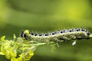 Caterpillar. photo