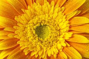 close up view of yellow flower and water drops
