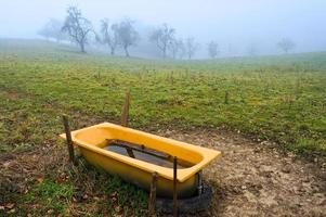 water beverage in form of bathtub at the pasture