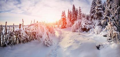beautiful tree in the snow on a sunny winter day photo