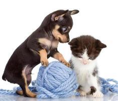 puppy consoles a kitten