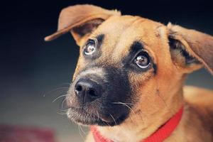Cute Puppy Looking up photo