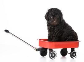 puppy sitting in wagon