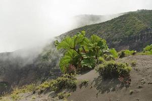 Vegetación en el cráter del volcán irazú, cartago, costa rica.