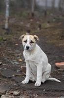 Portrait of adorable stray puppy