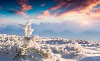 Frozen small fir tree in winter mountains at sunset