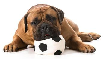 sports hound