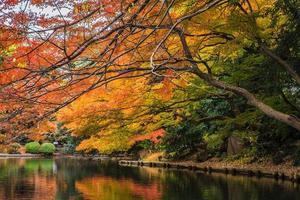 jardín de otoño en el parque foto
