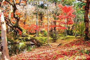 Autumn Japanese garden with maple