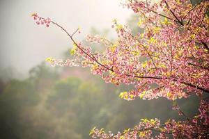 vintage de flor de cerezo rosa