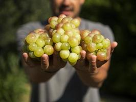 man holding a bunch of grapes in his hands photo