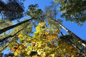 otoño de oro. foto