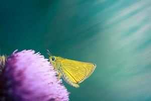 butterfly on pink flower photo