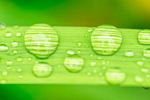 Macro closeup of Waterdrops on a Leaf photo